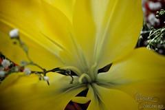 Composizione floreale 3