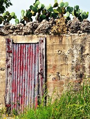Texas Hill Country Roadtrip (≈ ☼ ≈ giamarie≈ ☼ ≈) Tags: door wood flowers red cactus brick abandoned overgrown cacti concrete wooden rocks texas cement roadtrip structure wildflowers hillcountry dilapidated patina