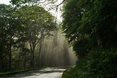 Enchantment in the forest again... (jaegemt1) Tags: road trees summer mist green grass fog forest virginia woods vegetation lush sunrays blueridgeparkway jaegemt1
