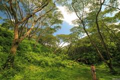 In The Summer (Jrindere) Tags: summer costa west rain walking ed waterfall los rainforest looking rica dreaming grecia jungle tico tica chorros sharpe huntre
