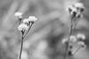 Flores e amores (Caroline Ritzmann) Tags: fun mel curitiba 2013 melinasouza