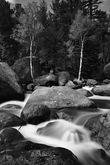 Mountain Stream and Aspens (scottrackers) Tags: longexposure trees blackandwhite mountains tree monochrome river nationalpark colorado rocks stream rocky boulder boulders rockymountain rockymountains apsen bigthompson apsens