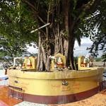 Great Tree at Pagoda thumbnail