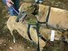GreyhoundPlanetDay2008019