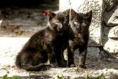 Katzenkinder - kittens