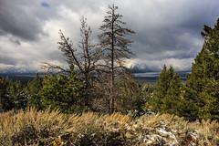 Signal Mountain Summit - Grand Tetons (Jackpicks) Tags: trees snow mountains wyoming tetons grandtetonnationalpark signalmountain flickrdiamond mygearandme