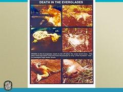 Slide 14 Everglades (MyFWCmedia) Tags: florida wildlife conservation everglades commission weston fwc westonflorida commissionmeeting floridafishandwildlife myfwc myfwccom myfwcmedia