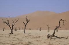 Namibia (richard.mcmanus.) Tags: africa landscape desert explore namibia gettyimages mcmanus sossusvlei deadvlei httpwwwgettyimagescouksearchsearchaspxassettypeimagefamilycreativeartistrichardmcmanus
