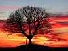 Fire in the sky (RainerSchuetz) Tags: sunset tree night oak sundown cloudy dramaticsky silhoutte afterglow blinkagain bestofblinkwinners blinksuperstars