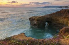 Sunset Cliffs in San Diego, Ca (Amy Hudechek Photography) Tags: ocean california flowers sunset summer sandiego cove pacificocean sunsetcliffs happyphotographer mygearandme amyhudechek