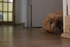 (claudia mazuela z) Tags: cat gato gata trini