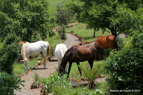 4 Horses Feeding
