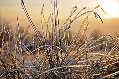 winter (Eggii) Tags: winter light sun cold grass time łódź warmtones frostyday lodzstoki