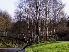 IMG_8865b350D (Wendy:) Tags: bridge river 350d january kitlens treebark highwater dodder spate