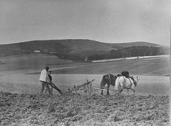 E01188 Ratton Farm (East Sussex Libraries Historical Photos) Tags: horse farm farming victorian farmland eastbourne farmer agriculture eastsussex plough 1870 1870s woodenplough rattonfarm