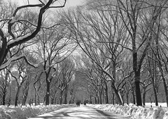 Central Park (portobello_belle) Tags: nyc blackandwhite bw snow newyork blackwhite centralpark manhattan blinkagain