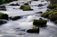 Morgenstimmung im Moosalbtal (dietermschmitt) Tags: deutschland natur schwarzwald badenwrttemberg malsch moosaltal