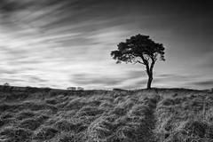 Windy Tree (~g@ry~ (clevedon-clarks)) Tags: longexposure monochrome mono blackwhite nikon somerset lonetree cloudmovement windytree garyclark mendiphills 10stop 10stopnd bigstopper nikkorafs1635mmf4gedvr vision:outdoor=0839 vision:clouds=0726