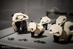 Osos panda, Akira Yosizawa (Jose Antonio Abad) Tags: espaa museum origami indoor zaragoza museo interiores papiroflexia exposicin aragn exihibition centodehistoria josantonioabad