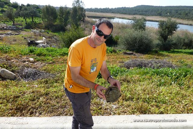 Ayudando a la tortuga a pasar la carretera a nuestra llegada a Patara