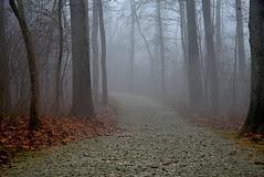 Up Around the Bend (John_Leu) Tags: fog weather outdoor landscape pentaxk1 centralohio columbusandfranklinmetroparks