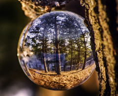 Water (patkelley3) Tags: crystal ball water forest sunset glass reflection trees