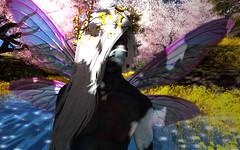 PeTou (Niki Wirefly) Tags: fae fairy fairey faerie male fantasy landscape colour secondlife wings niki sl