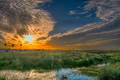 In Conil de la Frontera (Janos Kertesz) Tags: landscape sky horizon field rural nature sunset countryside country clouds meadow green grass scenery tree conildelafrontera costadelaluz andalusia spain