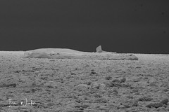 Middle Cove Ice-17-2 (Ian L Winter) Tags: nature newfoundland driftice ice middlecove logybaymiddlecoveoutercove newfoundlandandlabrador canada ca