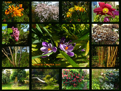 March Garden 2017 (Durley Beachbum) Tags: 117picturesin201752 garden tress flowers shrubs march bournemouth