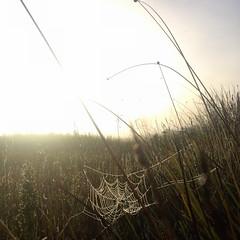 Spiderweb. Early morning. Melaleuca. Port Davey, Tasmania.