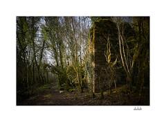 Les ruines du moulin de Verbois (dechab) Tags: