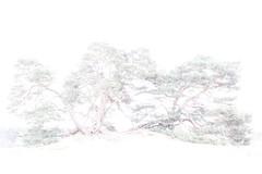 Kootwijkerzand (Renate van den Boom) Tags: 04april 2017 boom europa gelderland highkey jaar kootwijkerzand landschap maand natuur nederland renatevandenboom stijltechniek zandverstuiving