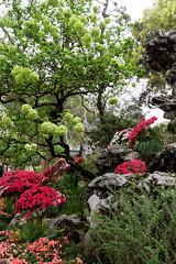 Flower garden (marko.erman) Tags: flowers garden suzhou jiangsu china harmony unesco world heritage site classical sony jardin worldheritagesite