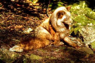 Pastell Fuchs - Pastel fox