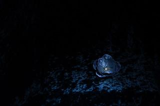 Night bloomer - explored