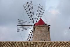 Saline di Trapani e Paceco, Sicily, April 17, 2017 441 (tango-) Tags: sicilia sizilien sicilie sicily italia italien italy saline trapani paceco windmills muliniavento