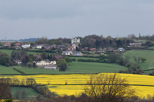 Stainborough Rapeseed Fields