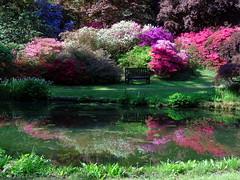 Exbury Gardens 3 (samm.doyle) Tags: azalea shrub reflections water springtime vibrant colours exbury gardens hampshire