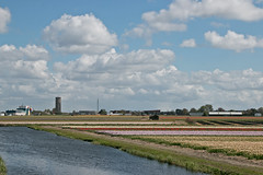 Tulpen Lisse (Roelie Wilms) Tags: lisse tulips tulpen tulp bloembollen nederland wolken clouds spring