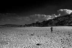 Seul (Meculda) Tags: mer monochrome monochrom noiretblanc blackandwhite france personne photographe rayure normandie plage