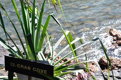 Hawaiian Treasures (orrice.photography) Tags: crab cove ocean hawaii green blue white brown words rocks plants sign