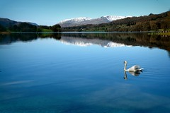 Esthwaite Water (plot19) Tags: swan esthwaite water landscape love light lakedistrict lakes uk nikon northern north northwest now england britain plot19 photography mountains snow blue blues