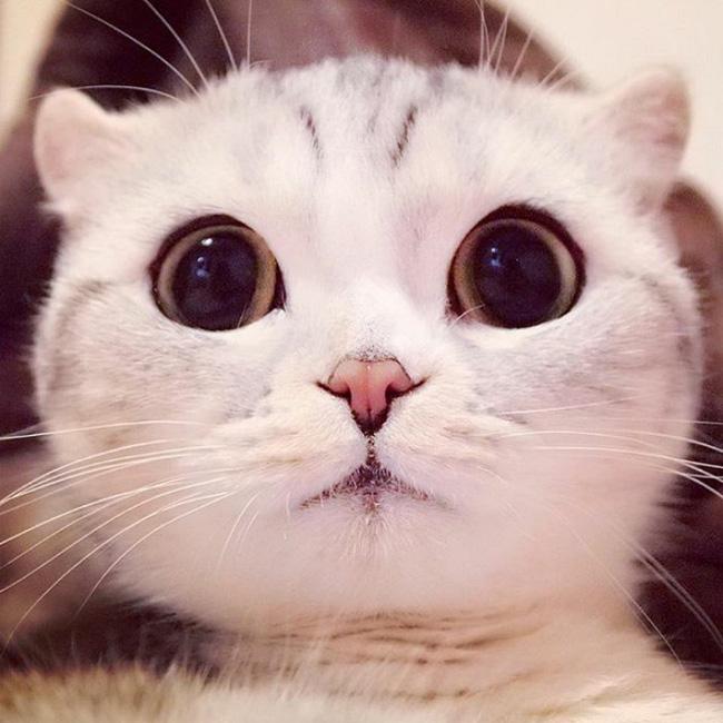 Bấn loạn với chú mèo đáng yêu có đôi mắt long lanh như đeo lens - Ảnh 9.