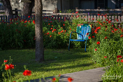 Chair among the poppies (Andrea Garza ~) Tags: texas texashillcountry tx southernliving antiquelawnchair peelingpaint quaint southerncharm poppy poppies chair red flowers flower garden gardening