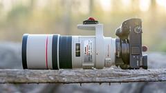 Canon EF300mm ƒ/4L IS USM | Metabones T Mk. IV | SONY ⍺6300 (.: mike | MKvip Beauty :.) Tags: sony⍺6300 sonyilce6300 sonyalpha6300 sonyalpha sony alpha emount ⍺6300 ilce6300 canonef300mmƒ4lisusm ef300mmf4lisusm canon canonl 300mmƒ4l 300mmƒ4 is usm adapter metabonesefemounttsmart metabonestmarkiv metabones markiv canonefe afadapter eftoemount efnex sony⍺7markii sony⍺7ii sonyilce7m2sonyalpha7m2 ⍺7ii ilce7m2 fe sel90m28g sonyfe90mmƒ28macrogoss 90mmf28macro oss 90mm f28 primelens prime manualexposure manual handheld availablelight naturallight backlight backlighting shallowdof bokeh bokehlicious beyondbokeh extremebokeh smoothbokeh closeup tele lens lensporn camera gearshot gearporn maximiliansau wörthamrhein germany europe mth mkvip metabonesefemounttsmartadaptermarkiv