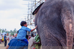 Dad Supports His Son's Dreams - Puthiyankam #vela 2017 April Kerala (Prasad.T.R :-)) Tags: puthiyankam vela 2016 april kerala alathur elephant boy kid father touch