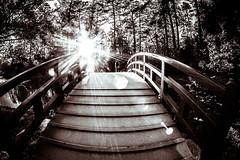 The Red Bridge (Wade Brooks) Tags: 2016 dukegardens april sunset bridge red bw