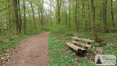 Bank im Ober-Olmer Wald