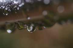 waterdrops (mtollich) Tags: water waterdrops wassertropfen wasser frühliing spring outdoor garden